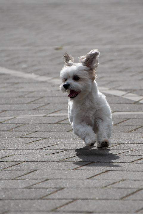 De hond van mijn moeder